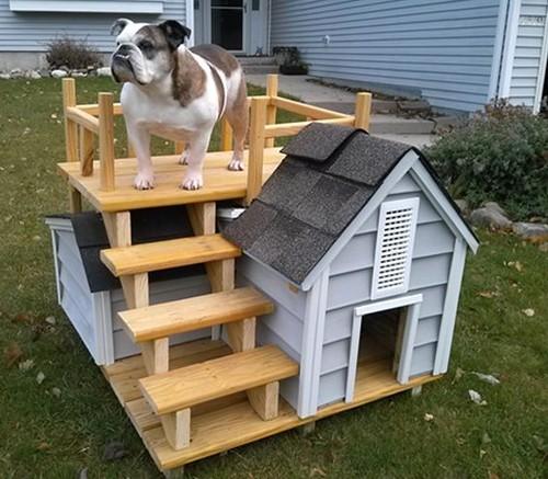 Собачий дом своими руками