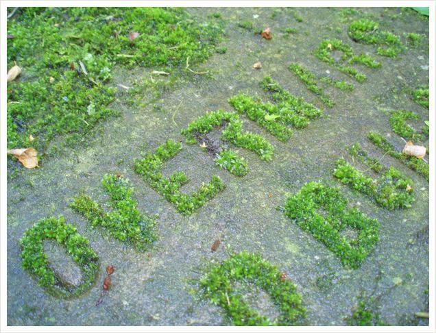 появление лишайников говорит об экологической чистоте местности
