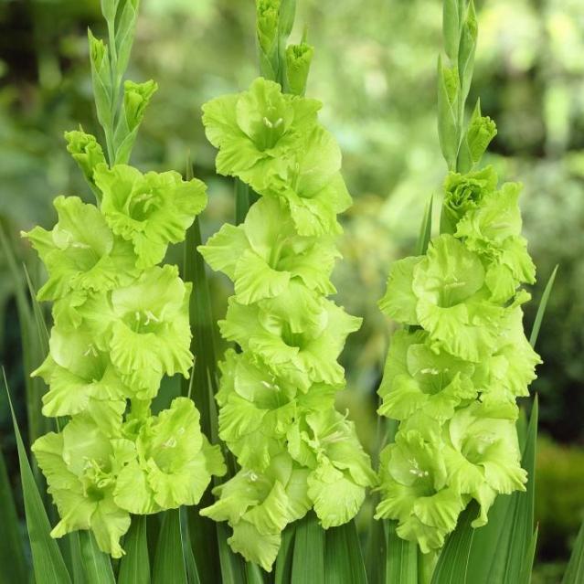 Цветы зелёного цвета