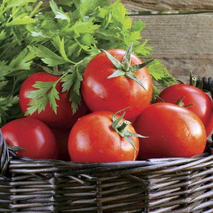 сорт ранних помидор в открытом грунте