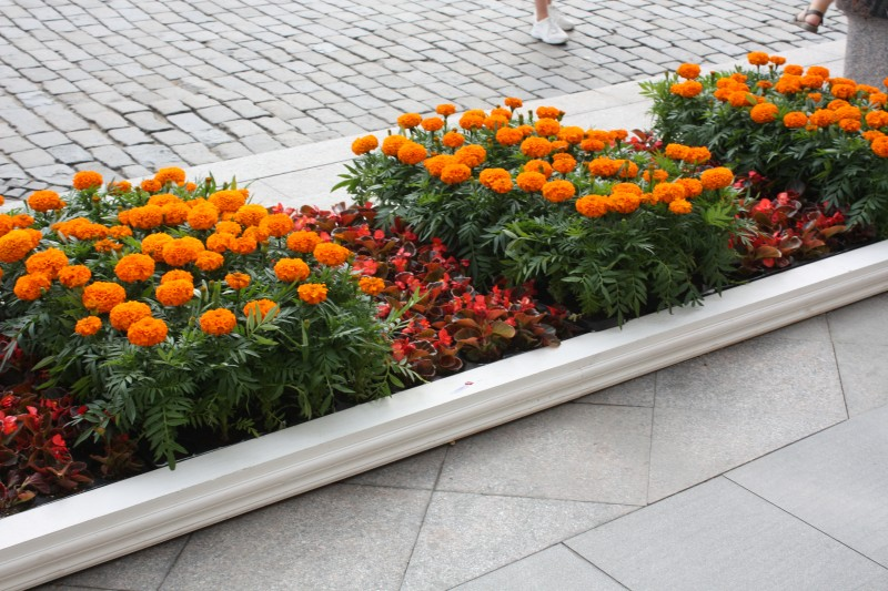 для цветники каскадные с шафранами и бархатцами фото автодоме могут комфортно